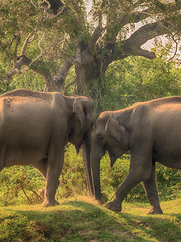 Inteligencia Artificial para luchar contra los cazadores furtivos de elefantes